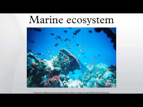 Marine ecosystem - YouTube
