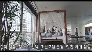 조선호텔 수영장 / 피트니스 / 강아지 산책 / sum…