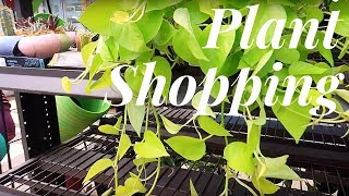 Plant Shopping at Big Box Stores | 3 Stores in 1 Day