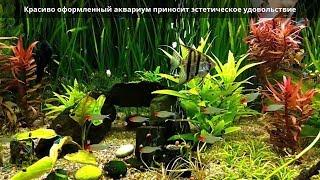 Грунт для аквариума. Какой аквариумный грунт выбрать? Гравий, галька, песок, декоративный камень