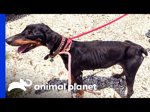 A VRC Doberman May End Up in Jail (For All the Right Reasons)