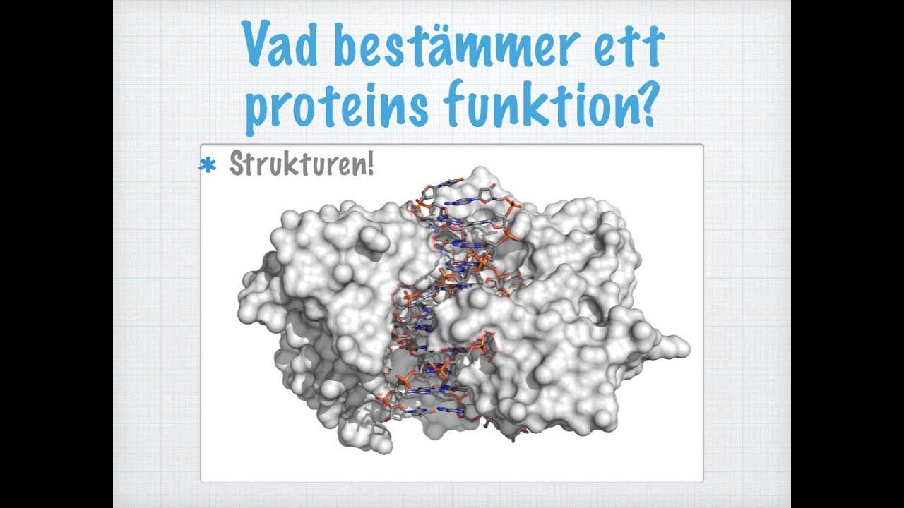 olika sorters protein