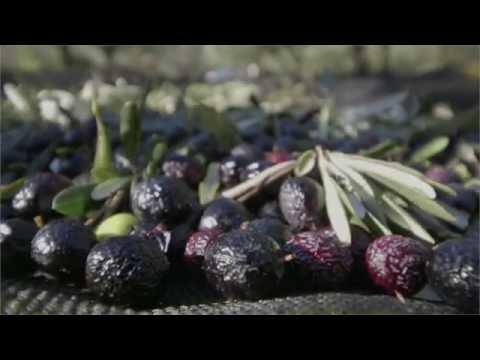 Moulin à huile de Barbentane - Film de présentation des activités