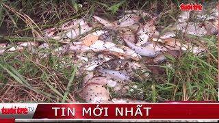 ⚡ Tin mới nhất | Cá chết hàng loạt ở đập Hố Chuối do nhiễm khuẩn