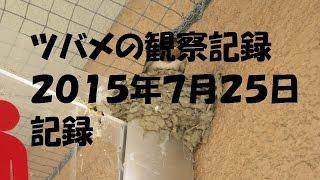 和歌山県 和歌山市でツバメの巣を発見。 早速、撮影しました。ツバメた...