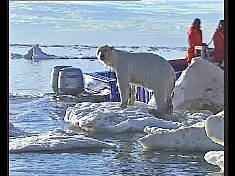 Polar Bear Hunting , And Shot By Jan Guillou , A Trophy Hunter !!