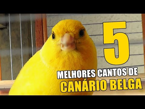 5 BEST SONGS OF CANARY