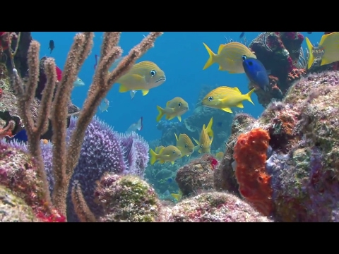 A New View of Coral Reefs - Science at NASA