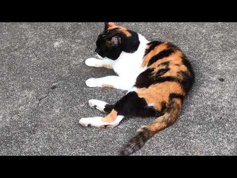 東京都内のある公園の野良猫