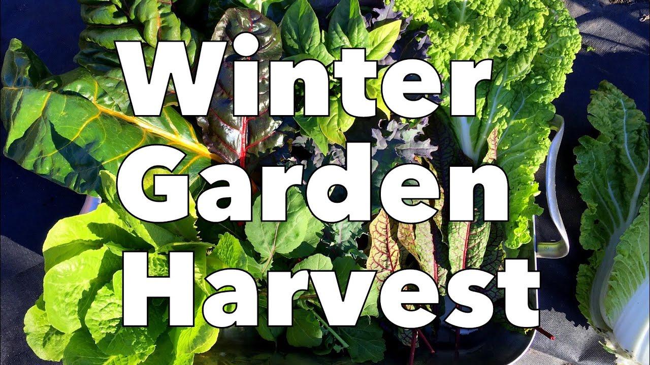 winter garden harvest youtube