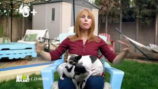 Кошка против собаки | Animal Planet