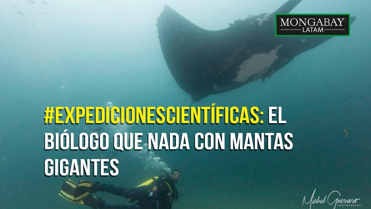 #ExpedicionesCientíficas El biólogo que nada con mantas gigantes