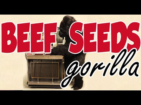 Bruno Mars - Gorilla (OFFICIAL Beef Seeds Cover)
