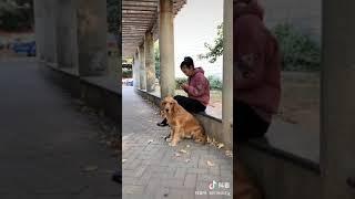 जानवरों में इंसानियत
