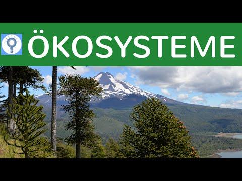 Was Ist Ein Okosystem Eigenschaften Kategorien Von Okosystemen