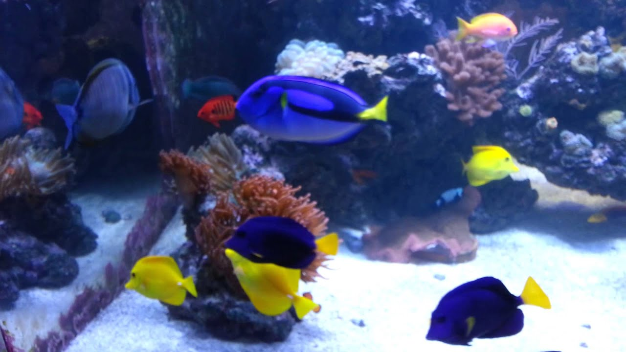 Treating Ich In A Reef Tank