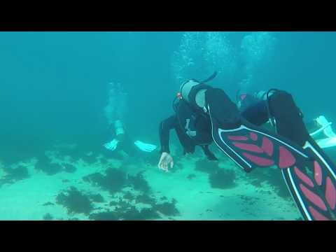 2017 05 28 Gordon's Bay - Sydney - Dive 1 (RAW)