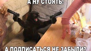 Фото смешных и милых котов, котят