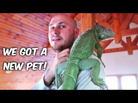 We Got a New Pet!