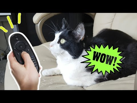 How To Entertain The Cat When You're Out (a Live TV for Him)