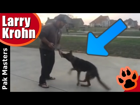 Dog training with luring, marking, verbal corrections, physical corrections and food reward