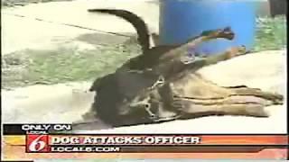 Электрошокер против собак! 🐶 Нападение собак на полицейского!