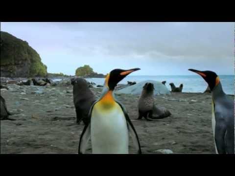 Документальный фильм про Пингвинов