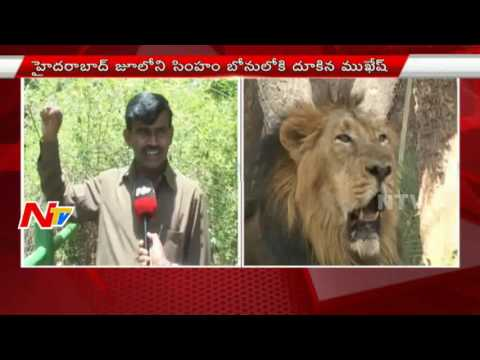 Special Report On Lions Lounge Security Measures In  Hyderabad Zoo Park | NTV