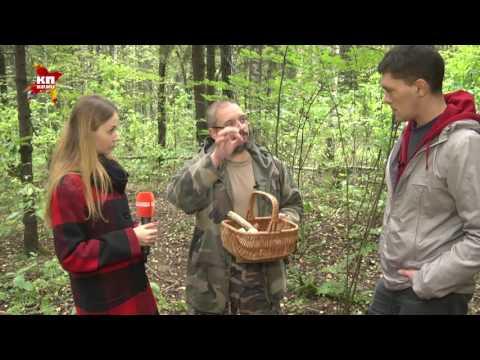 как вырастить мицелии грибов на даче