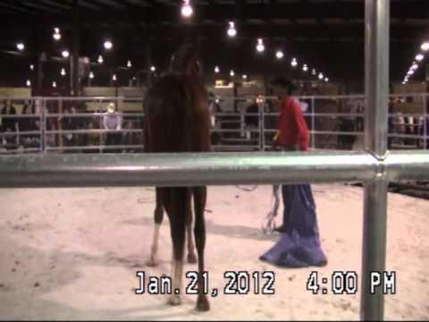 Maryland World Horse Expo 2012 with Mike Hughes, Auburn California