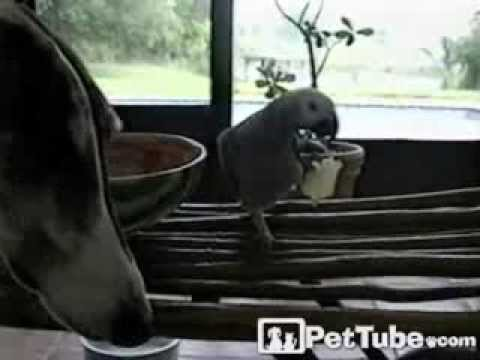 Parrot Loses Its Chips- PetTube