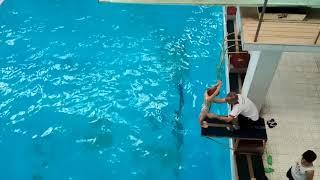 Открытый урок в бассейне 1 октября. Ч 10