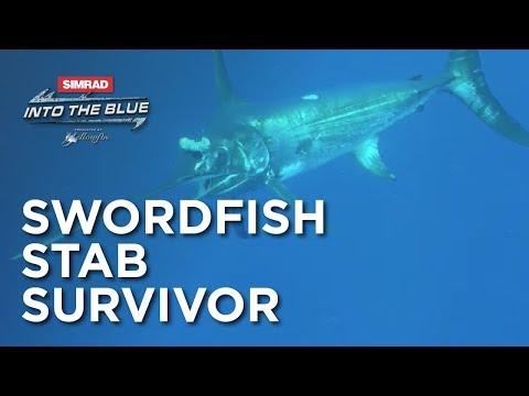 Swordfish Stab Survivor | Into The Blue