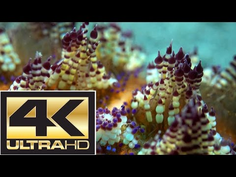 ♫♫♫ New Art of Relax ♥ Under Water Relax ♥ Macro-footage ♥ Underwater UltraHD Video ♥ Relax Music
