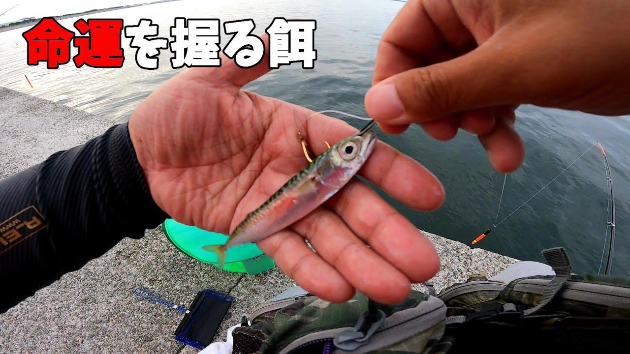 現地で釣った小サバを泳がせると・・・。