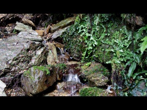 Relaxing Sound of Water Stream - Nature Forest - 1 Hour Relaxation Meditation Sleep Sounds