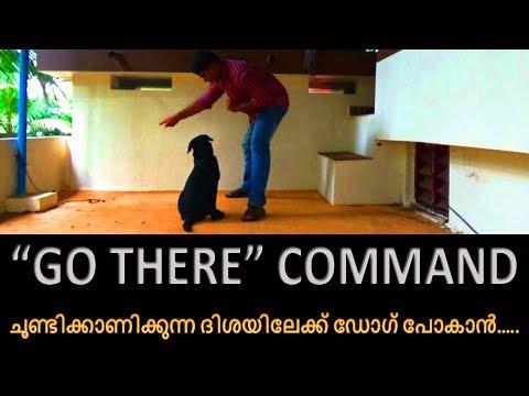 dog training :' go there training'  Malayalam:kerala dog training :വളര്ത്തു നായയെ പരിശീലിപ്പിക്കാം