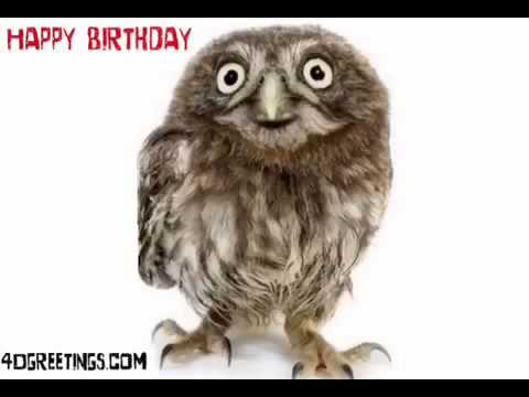 Happy Birthday Greeting By A Cute Owl Youtube