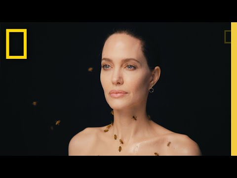Nat Geo Celebrates 'World Bee Day' with Angelina Jolie