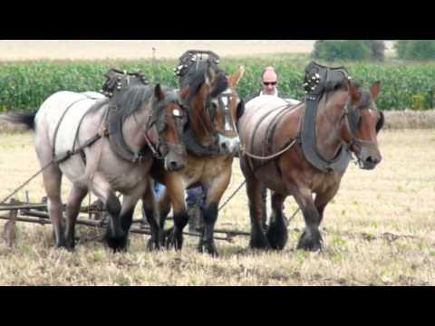 Rencontre homme eleveur-de-chevaux, hommes célibataires