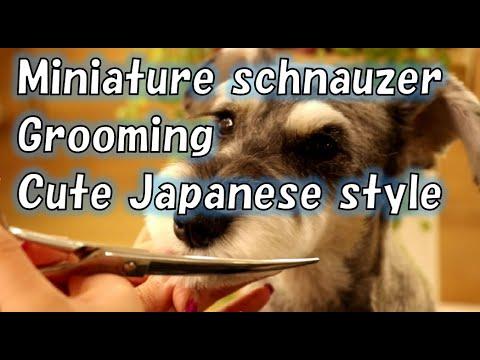 PMiniature schnauzer Grooming  Cute Japanese style dogdiamond tokyo