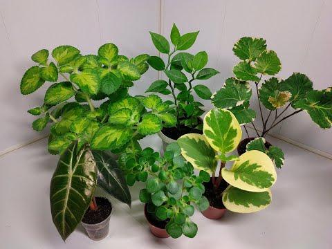 Растения едут в новый дом #2