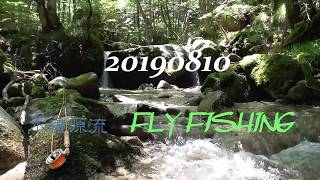 木曽川源流のニッコウイワナの渓でサイトフィッシング。フライフィッシング 20190810