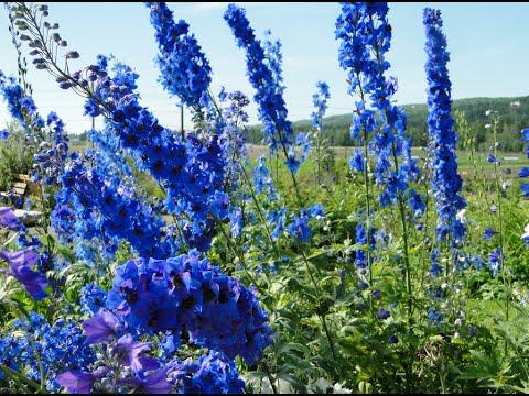 Visiting Alaska Botanical Garden in Anchorage, Alaska, United States