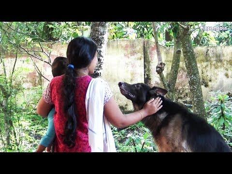 Dog training malayalam- teach dog sit and stand- kerala dog training- വളർത്തു നായയെ പരിശീലിപ്പിക്കാം