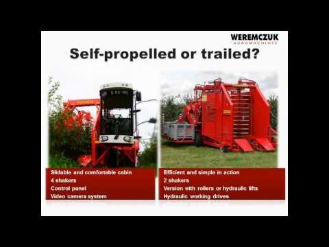 Sour cherry harvesting technology