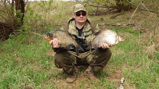 Эти Лещи рвут поводки!!! Рыбалка на фидер, река западная Двина