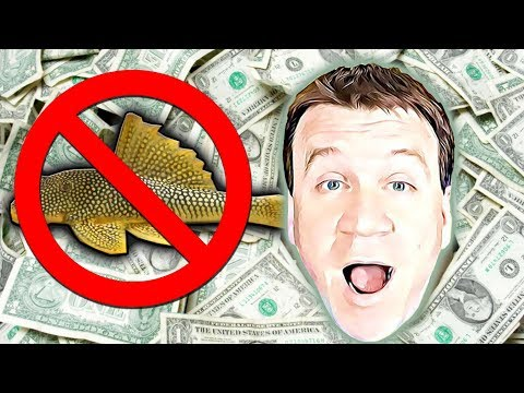 How To Sell A $1000 A Month Breeding For Profit And Its Not Fish!