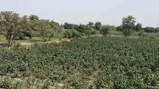 Beautiful Green Village of Miya wali (Pakistan Tour)