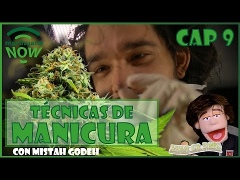 3 maneras de COSECHAR LA MARIHUANA Y ¡Marihuana GRATIS!